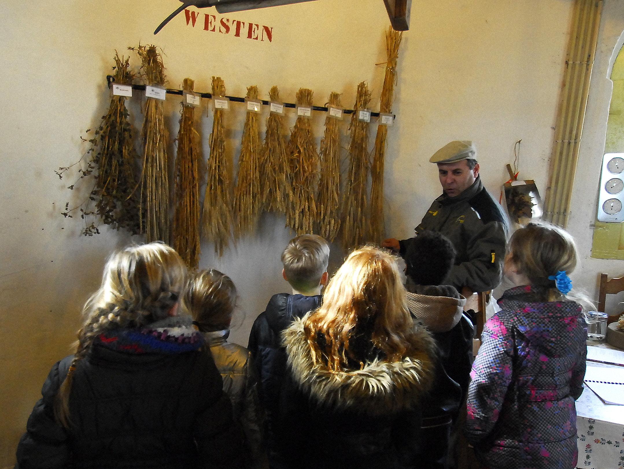 De schoolkinderen leren dat er heel veel verschillende soorten graan zijn.