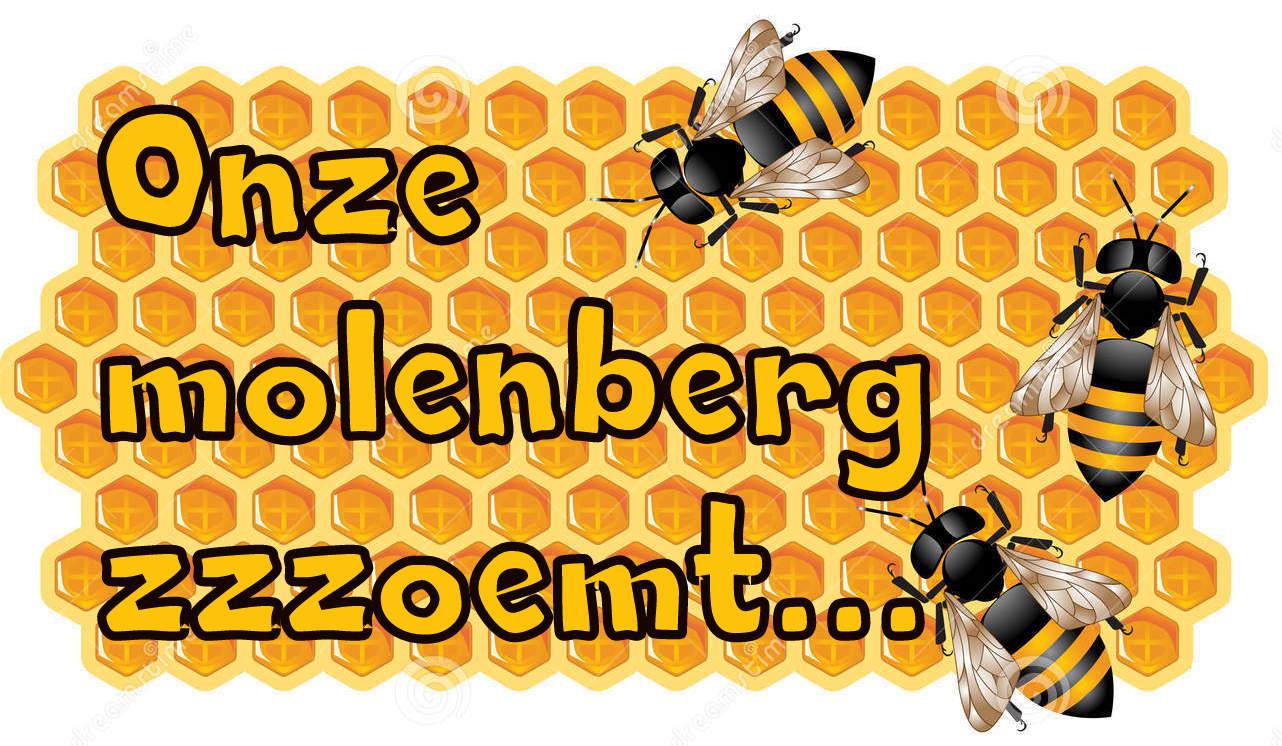 honingraat-met-bijen-10549563-001