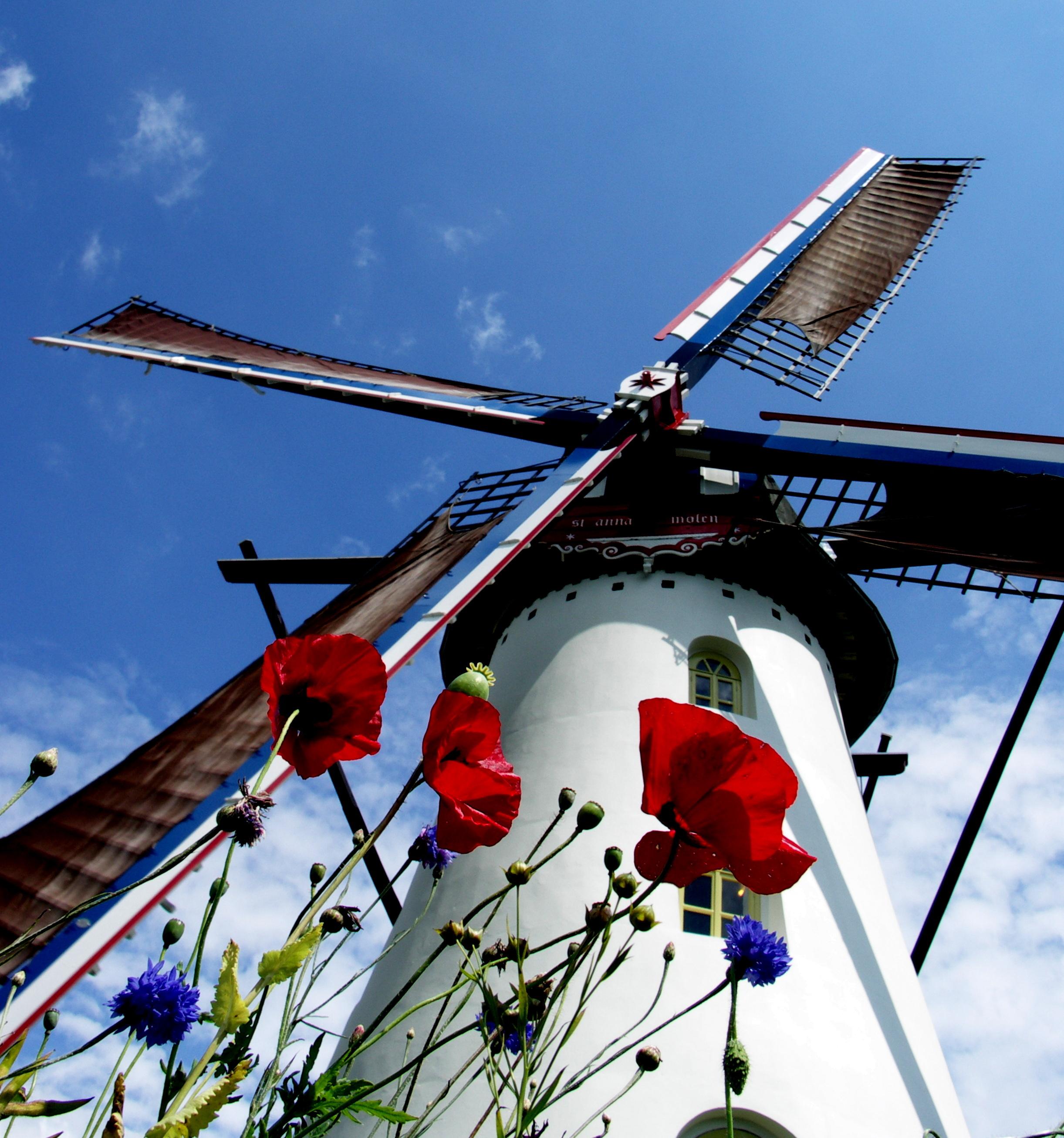 Poppies op de molenberg