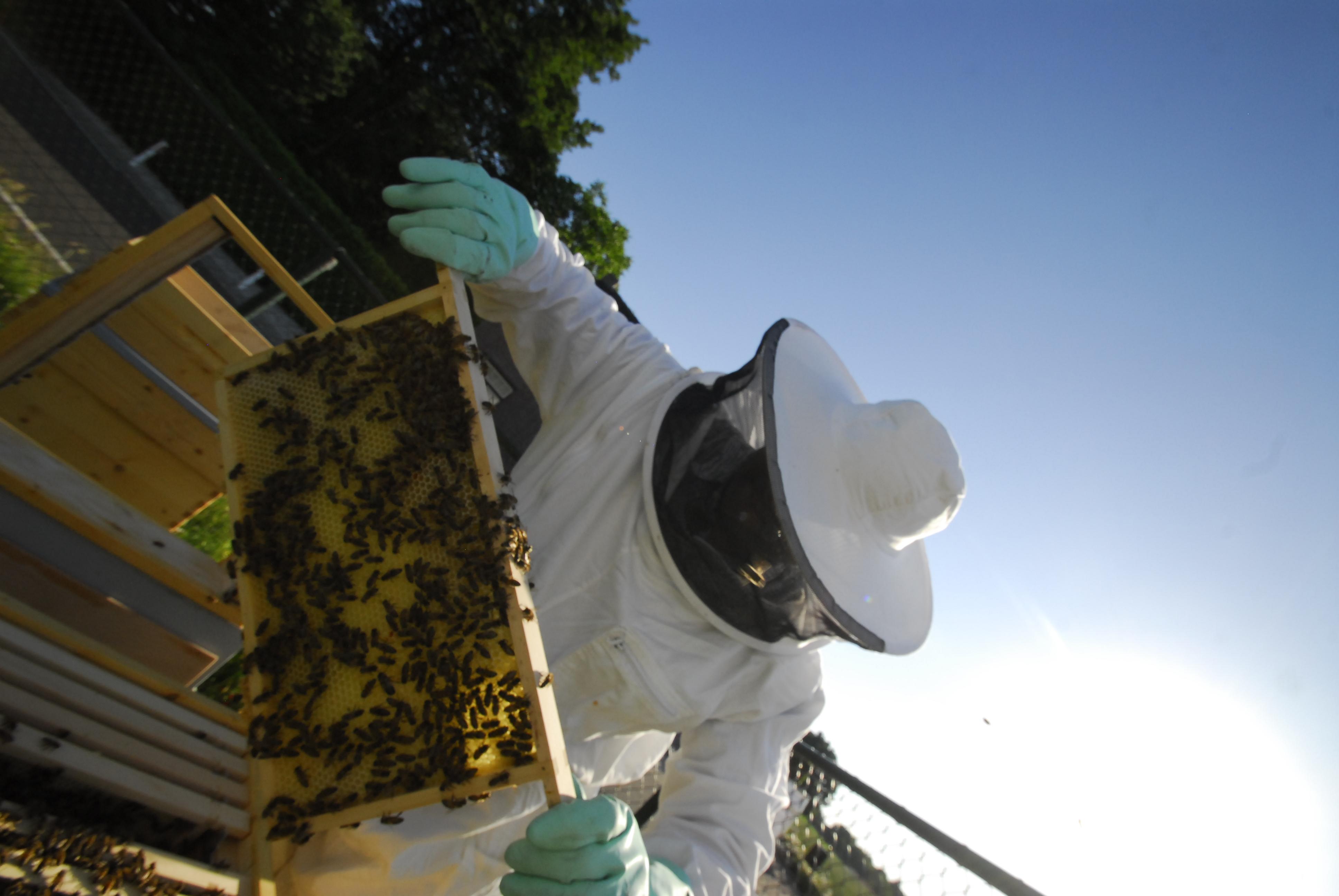 Imkers controleren iedere dag onze bijenkasten.