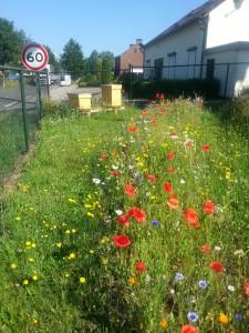 Bijen- en vlindervriendelijke bloemen in de molentuin