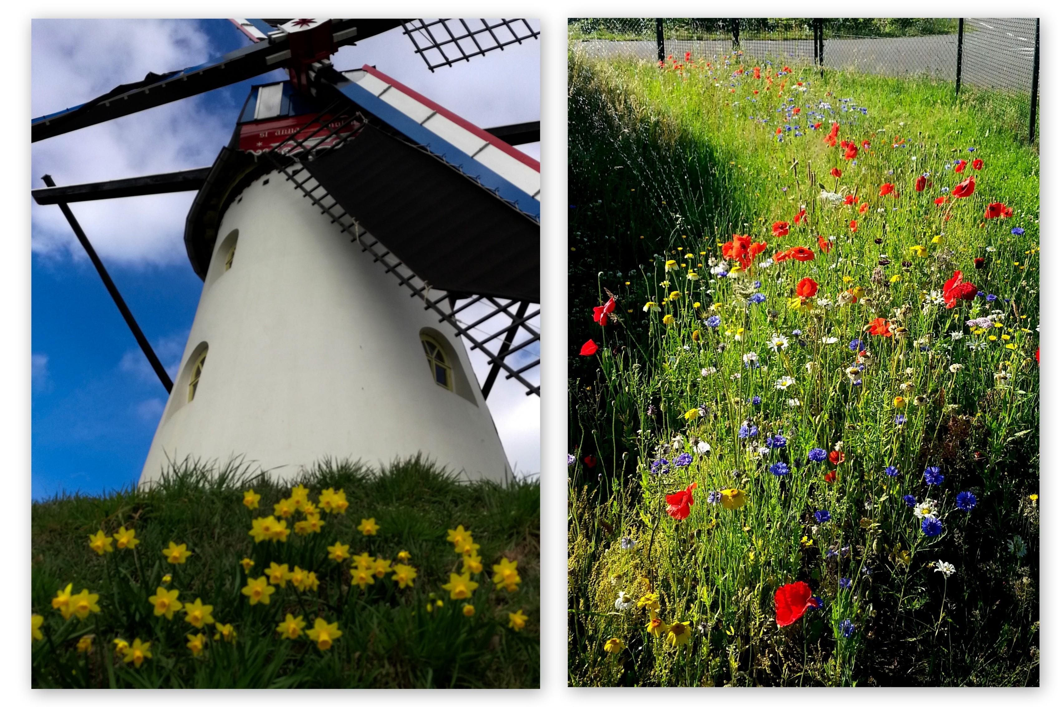 Bloemenpracht op de molenbergen